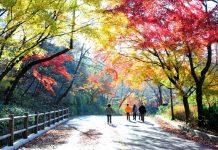 Đường đến công viên Namsan mùa thu